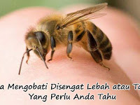 Cara Mengobati Disengat Lebah atau Tawon Yang Perlu Anda Tahu