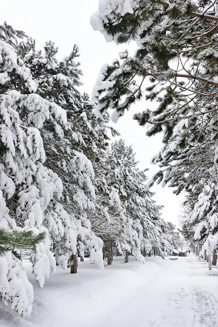 photographier l'hiver