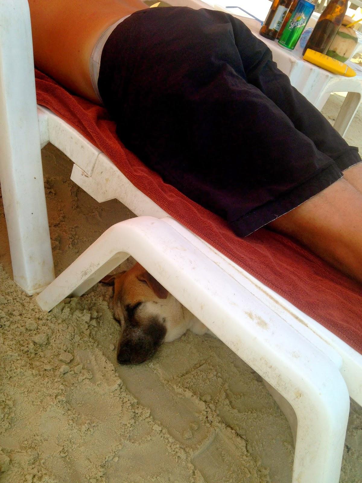 herrelösa hundar sverige