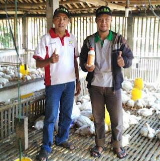 Harga Obat Nafsu Makan Ayam Broiler