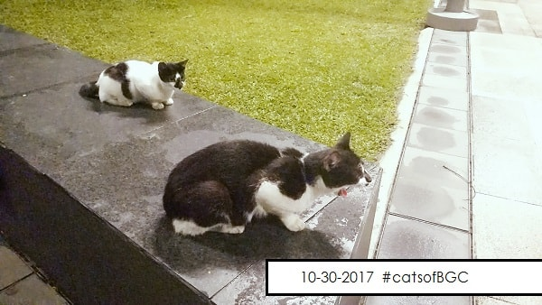 Cats of BGC