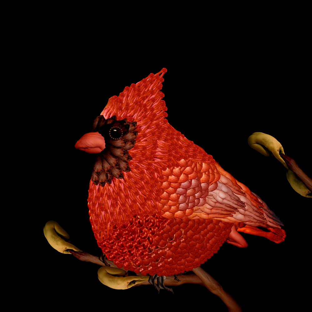 08-Bird-Cardinal-Cecelia-Webber-Nature-Replicated-with-Nude-Models-www-designstack-co