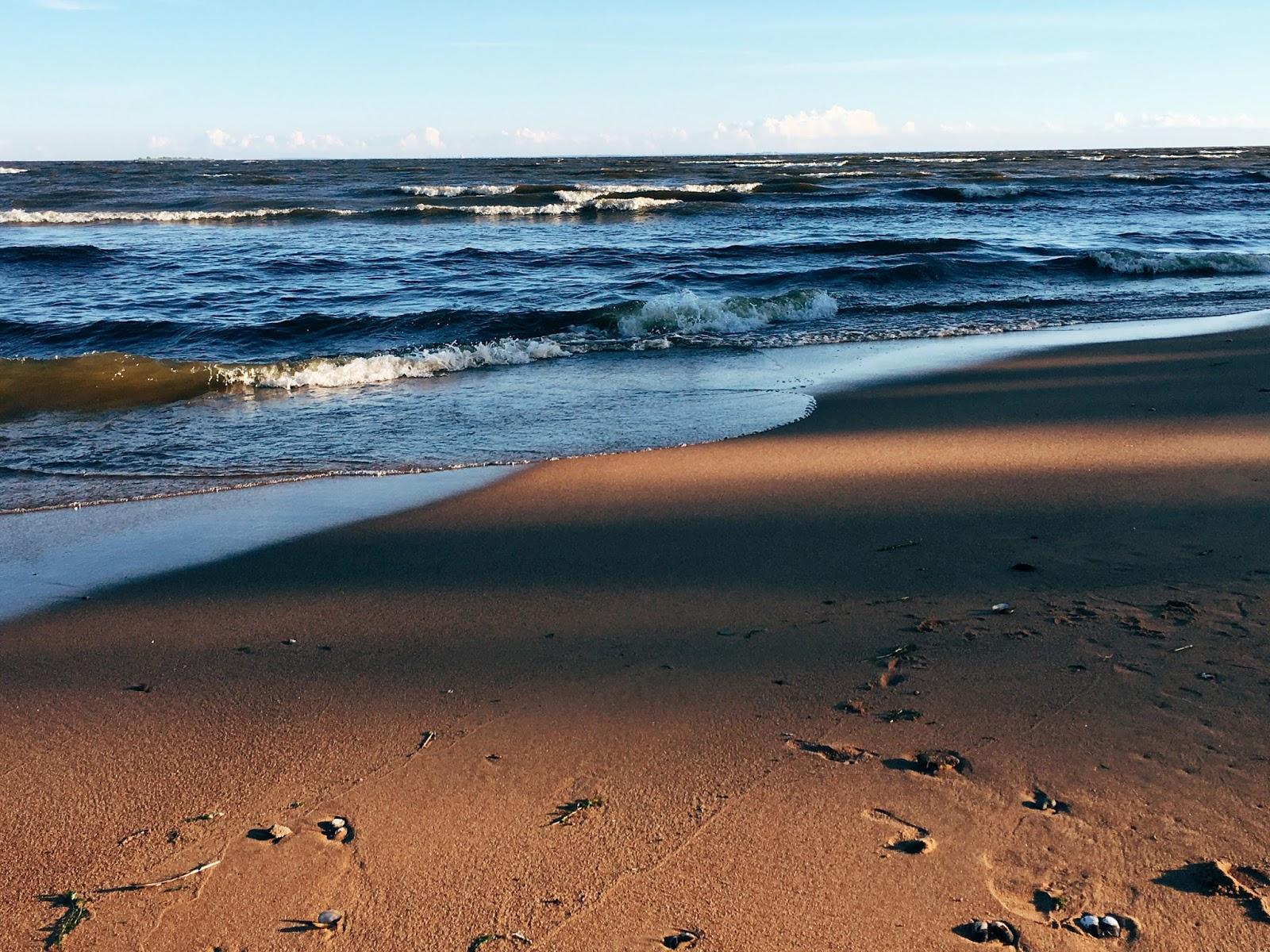 известен репино фото финского залива поддоны перфорированные сплошные