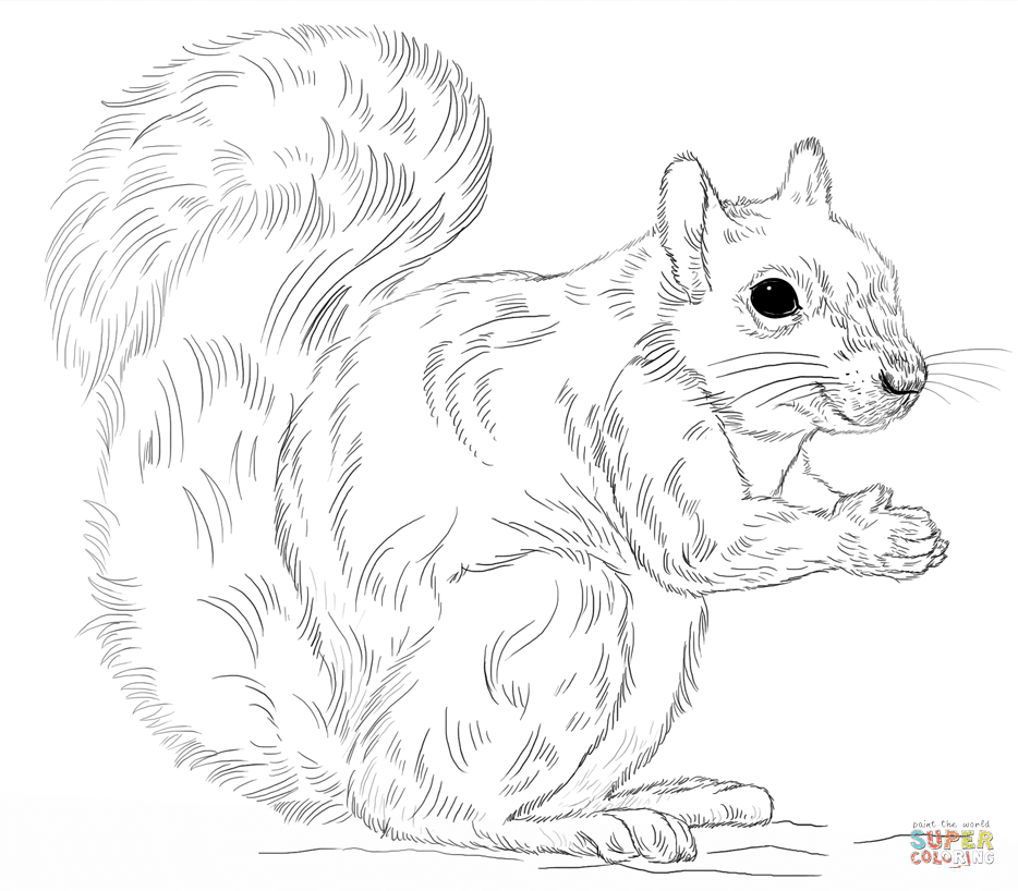 Coloring pages of a squirrel ~ Robbie's Paw Prints