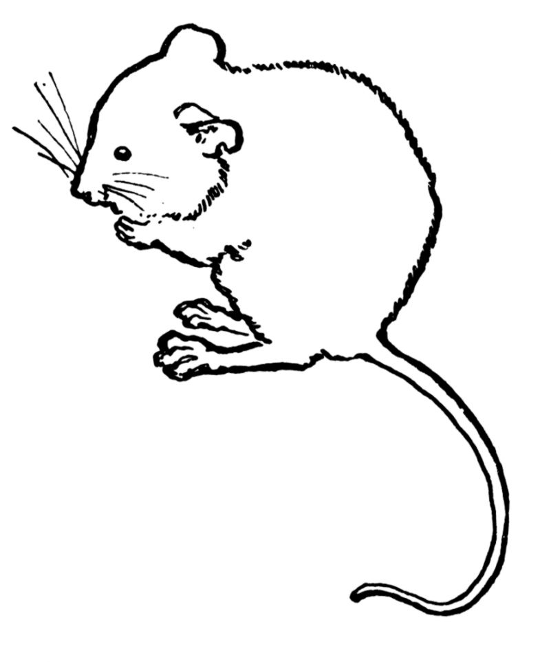 Mouse ClipArt ETC