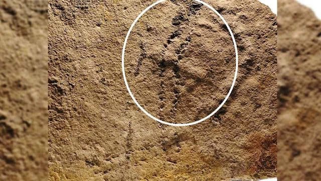 Scientists Discover 'Oldest Footprints on Earth'