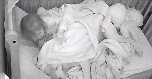 Padre dejó dormir a un pitbull de 50 kilos en la cuna de su bebé, las imágenes grabadas crean titulares