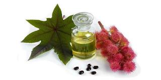 Unti e Bisunti Gli Oli Vegetali Parte Tre olio di ricino