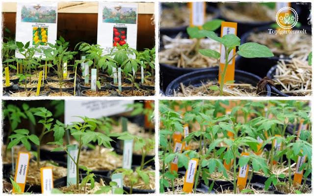 Gartenblog Topfgartenwelt Gartenmesse: Garten Salzburg 2017 Chili und Paprika