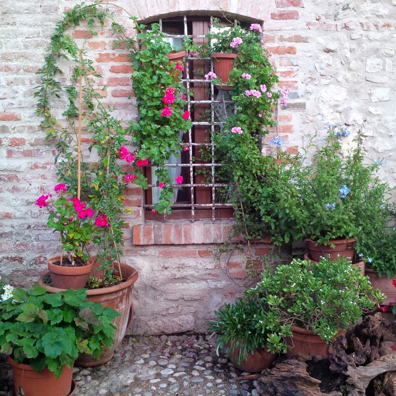 The potted garden of the Marostican Rapunzel