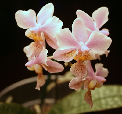 Focus on life: The beauty of flowers: The pink orchid :: All Pretty Things