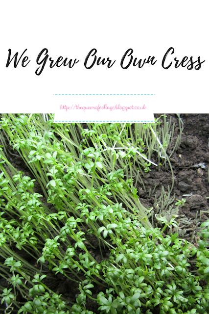 We Grew Our Own Cress
