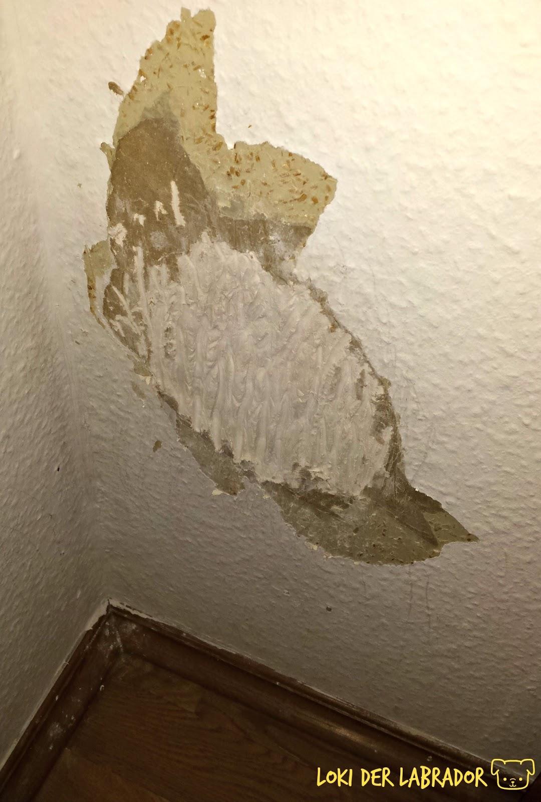 zerkratzte Wand durch Hund