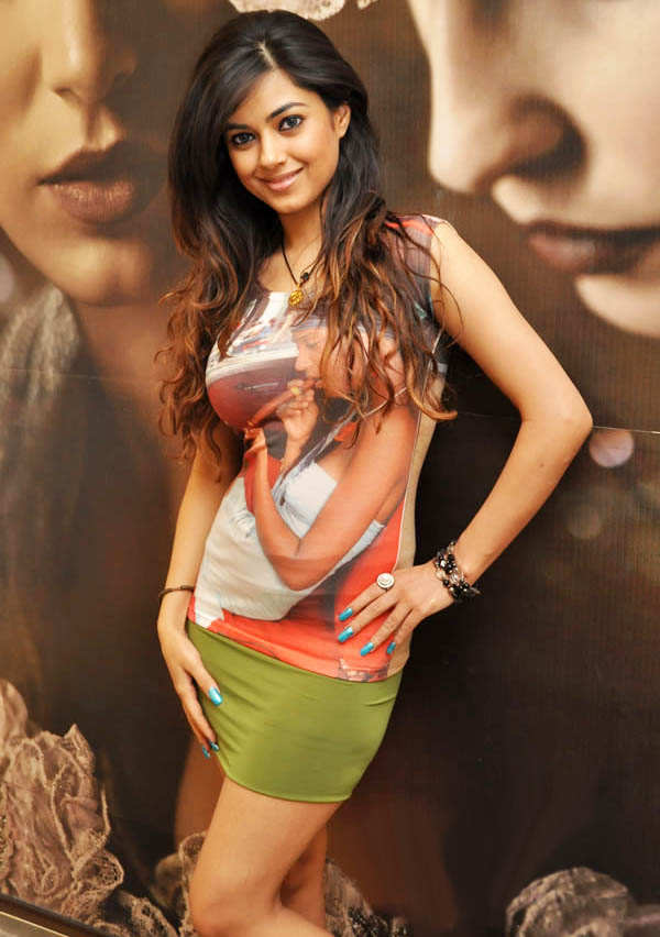 Cute Dogs Full Hd Wallpapers All Collection Wallpapers Latest Meera Chopra Hot Stills