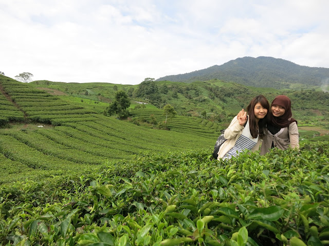 kebun teh solok