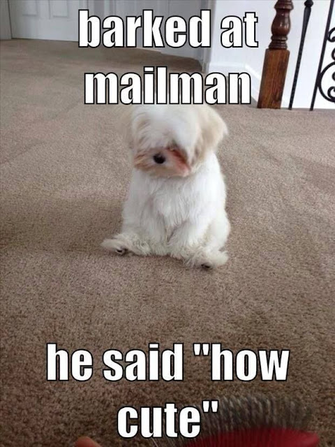 Barked At The Mailman funny cute memes adorable dog pets meme lol funny quotes funny sayings