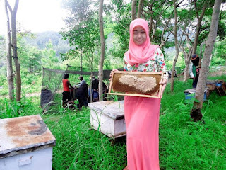 madu alami bekasi madu lanceng asli bekasi