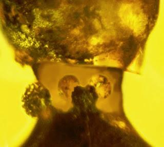 www.cienciaxyz.blogspot.com