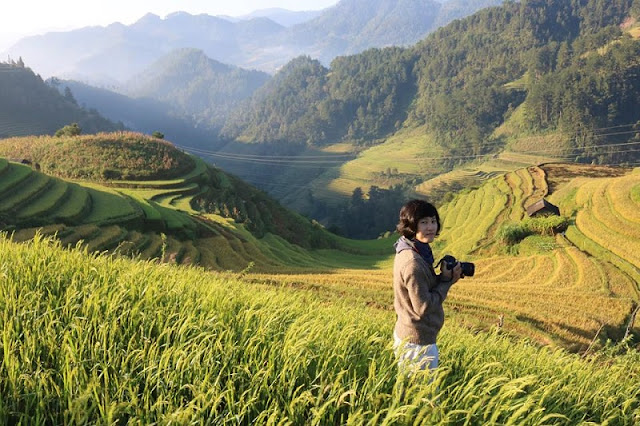 Mu Cang Chai beautiful surprise in the middle of the golden season to hold all visitors 1