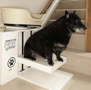 animal monte-escalier