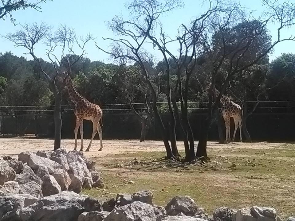 Mams de deux bambinos notre sortie au parc zoologique de for Parc zoologique 78