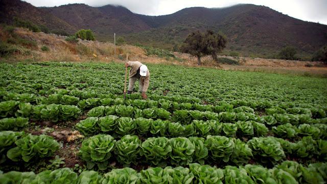 Campesinos o Agroindustria: ¿Quién nos alimenta en realidad?