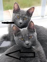 كيفية التعامل مع القطط العصبية