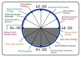 Jam kerja biologi manusia dalam kehidupan sehari-hari