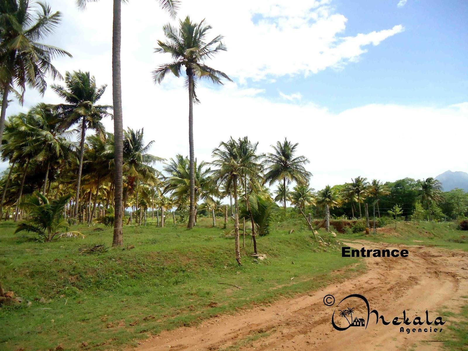 3 Acres Agriculture land for sale at Navakkarai,(Ettimadai