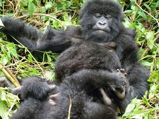 29821 10151859546120110 122700815 n Rwanda where Africa comes together