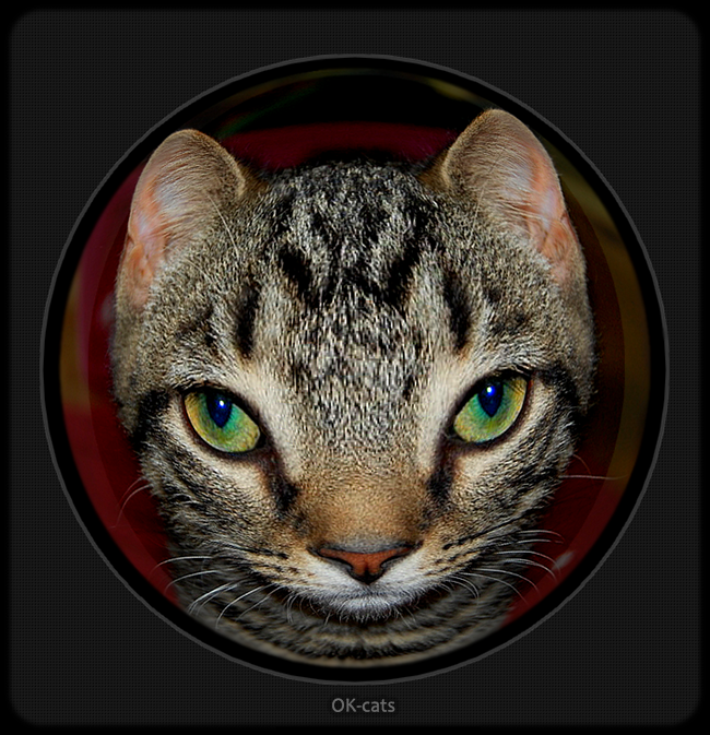 Photoshopped Cat picture • Who's That Knocking at My Door? Funny kitty (fisheye lens)