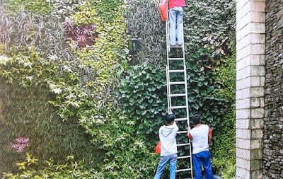 Tukang Taman Vertikal Surabaya | Vertical Garden 20