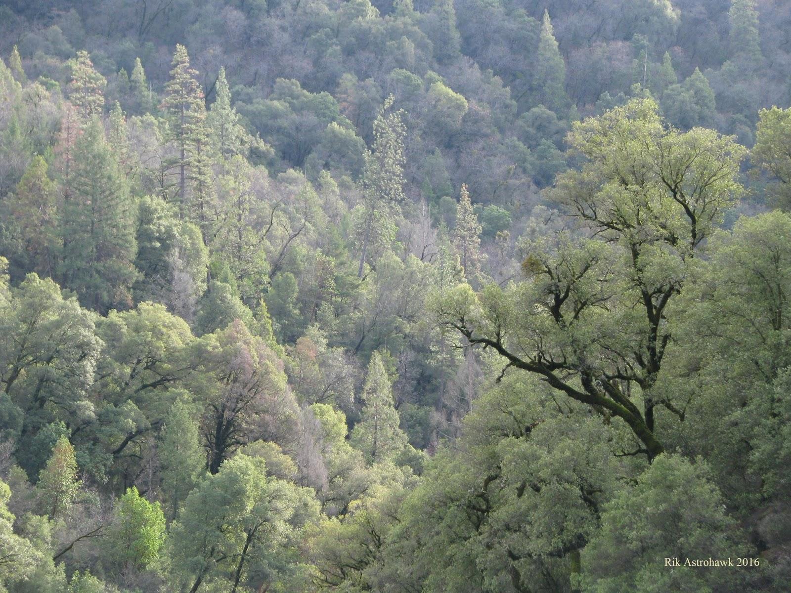 Spirit Symbo... Oak Tree Symbolism Marriage