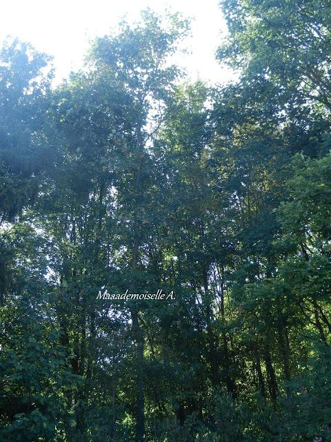 Lever de soleil derrière arbres  - Aube - Champagne Ardenne - France