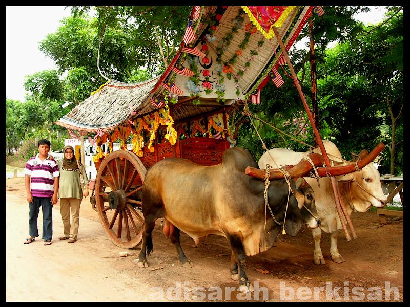 adisarah berkisah Cuti di Melaka  Kereta lembu dari Melaka