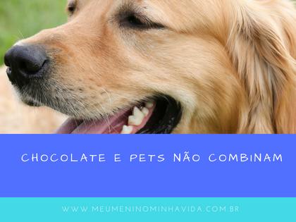 Chocolate e pets não combinam