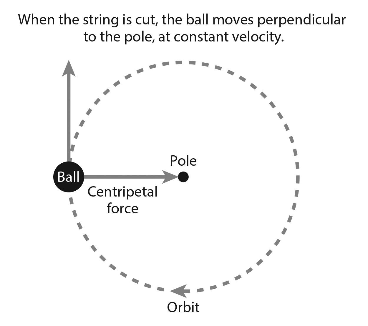 Weekly Science Quiz: Centrifugal vs. Centripetal