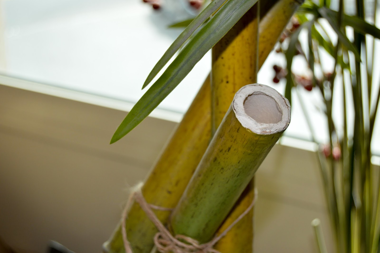 Bamboo Plant free stock photos - Royalty Free Images