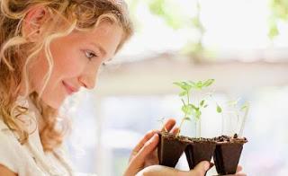 Bicara, komunikasi, tanaman, portal, positif