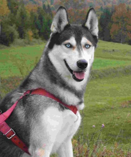 All List Of Different Dogs Breeds: Different Types Of Dogs