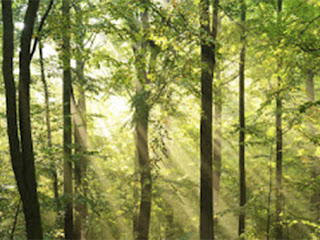 floresta iluminada pelo sol