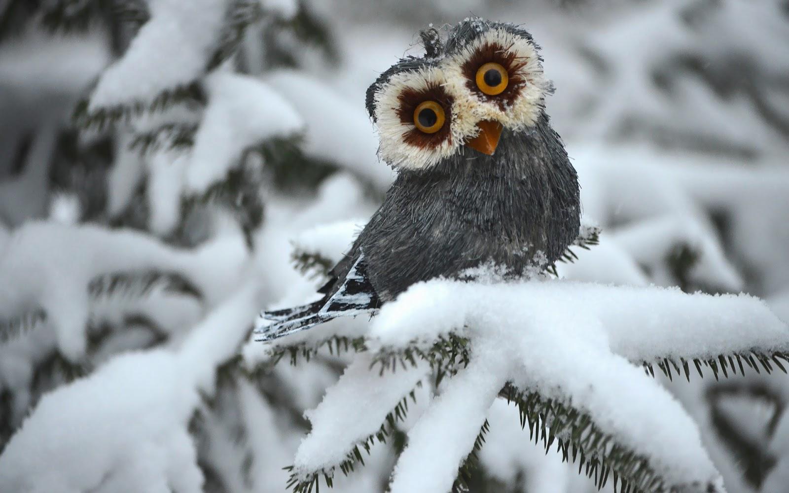 Uil in een besneeuwde boom