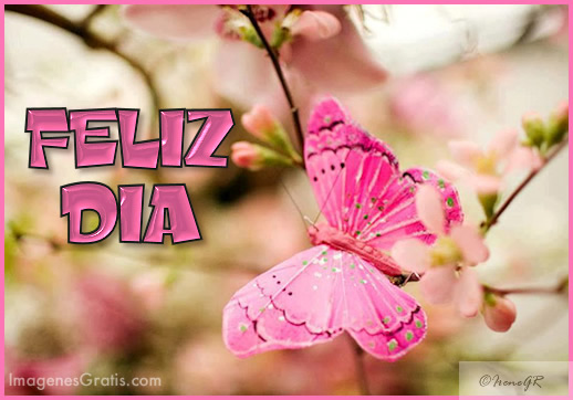 mariposa rosa Feliz Dia