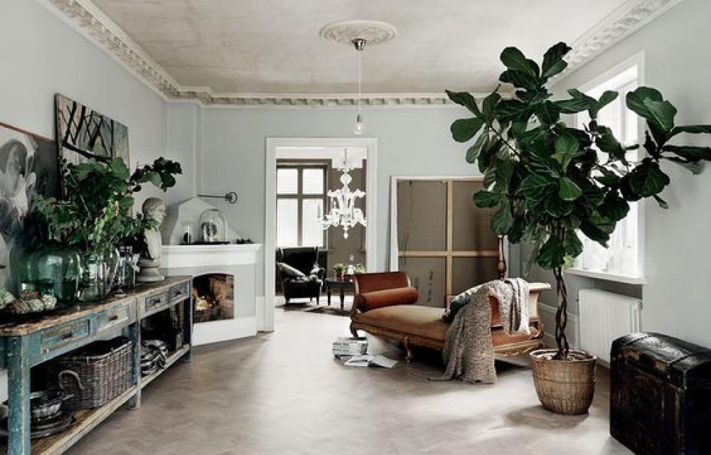 piante per arredare casa