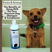 BVH Shampoo and Conditioner Review