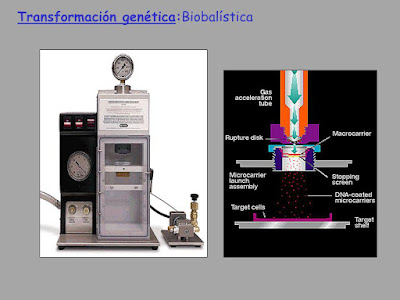 Biobalisitic genomic insertion