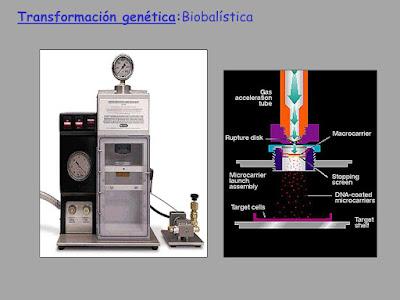 Biobalisitic genomic insertion