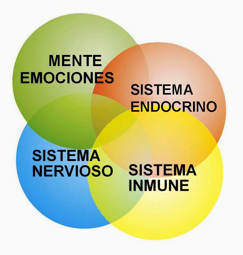 psconeuroinmunología conexión cuerpo mente salud mente emociones