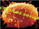 Células sexuais