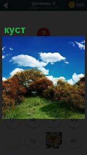 На фоне неба с облаками на зеленой поляне растет куст